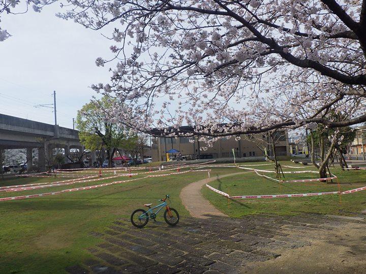 桜満開、やっと春ですね~!