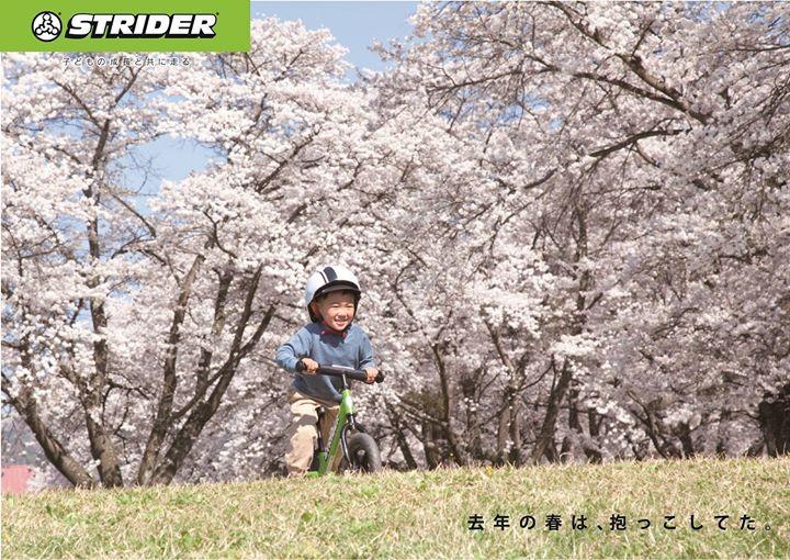 春ですね~、延岡は満開、風で花びらが舞ったり綺麗で素敵ですよ~、やっと暖かくなりいろいろ楽しめる季節ですね、ストライダーもよろしくでーす!